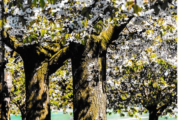Naturblick Ausgabe 2/2018 – Blütenzauber im Baselland