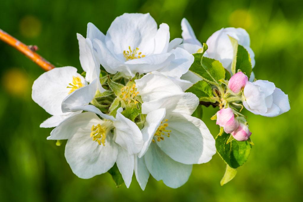 Fotoworkshop – Blütenzauber im Baselland – April 2022