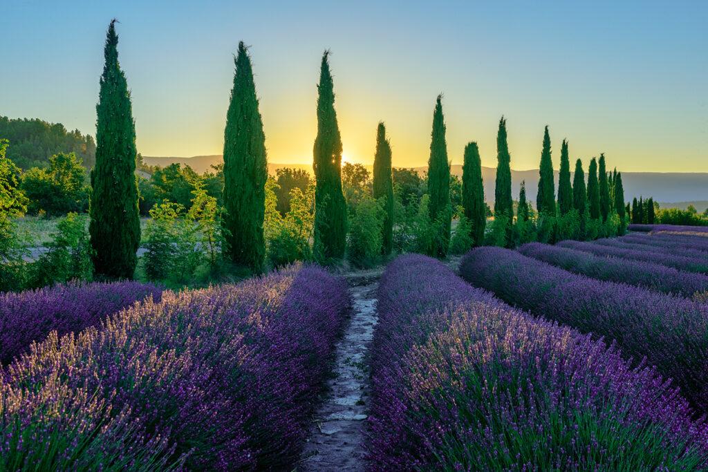 Fotoreise – Lavendelfelder in der Provence – 4. – 9. Juli 2021