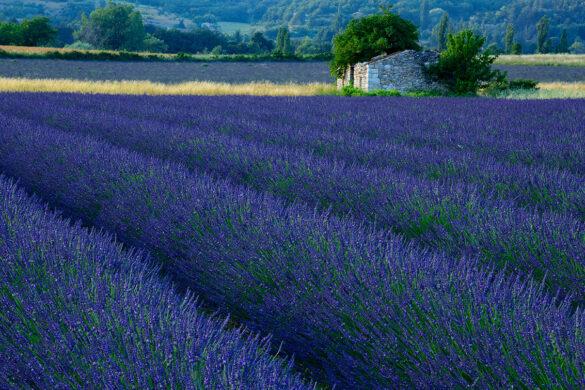 Fotoreise – Provence 5. – 10. Juli 2020