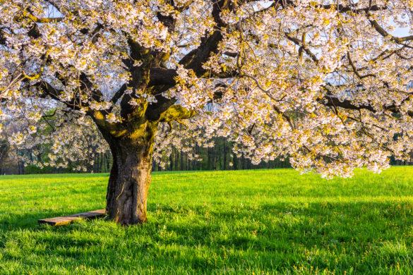 Fotoworkshop – Blütenzauber im Baselland – 16. April 2021