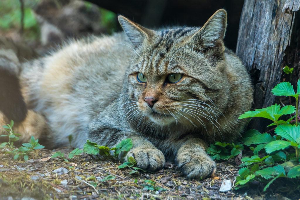 Tierpark Goldau – Einführung in die Tierfotografie