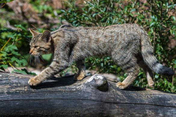 Fotoworkshop – Einführung in die Tierfotografie – 9. Mai 2020