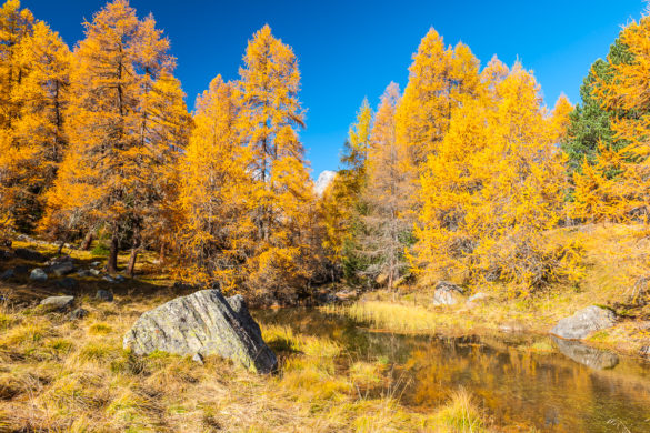 Fotoreise – Das goldene Engadin – 10. bis 14. Oktober 2020