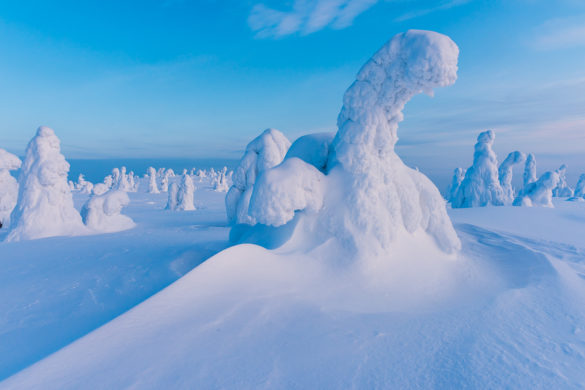 Fotoreise – Finnland – Bizarres Winterwunderland – 12. bis 19. Januar 2020
