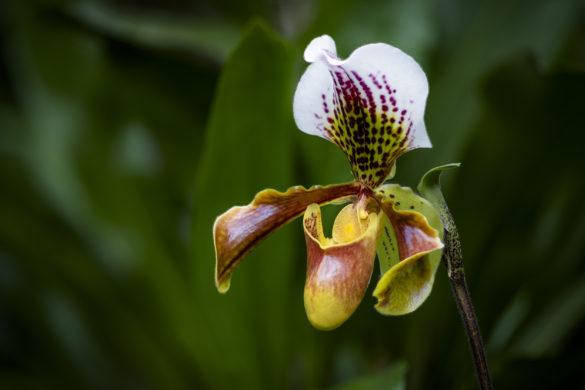 Fotoworkshop – Makrofotografie im Orchideenhaus – 3. Oktober 2019