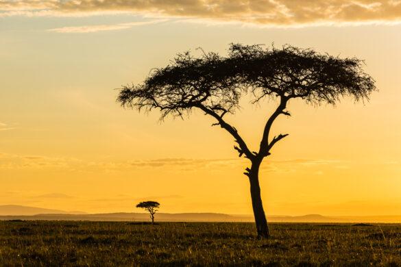 Fotoreise – Kenia – 16. bis 31. August 2019 (Pilotreise)