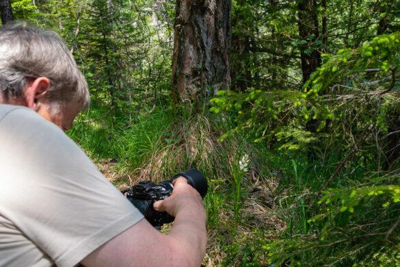 Fotoworkshop – Orchideen im Bergsturzgebiet