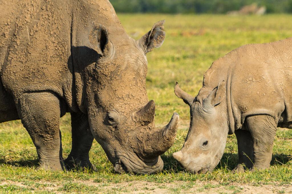 Fotoreise – Kenia – 6. bis 22. August 2021
