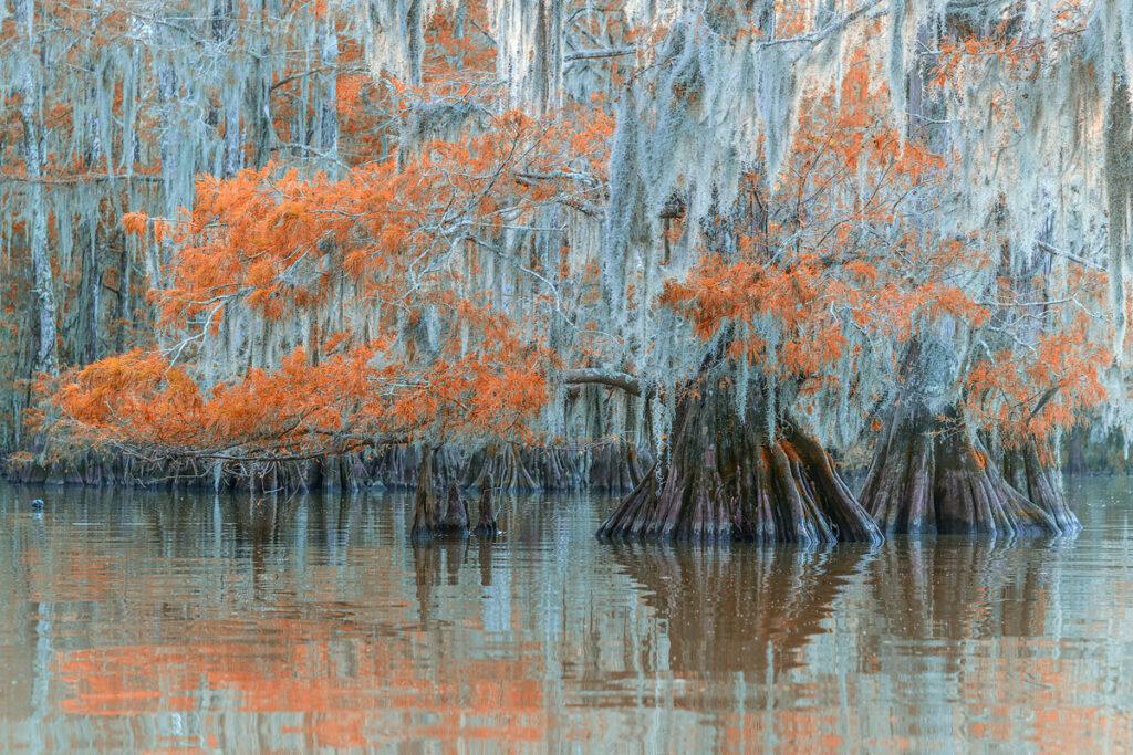 Fotoreise – USA – Deep South – 29. Oktober – 12. November 2022