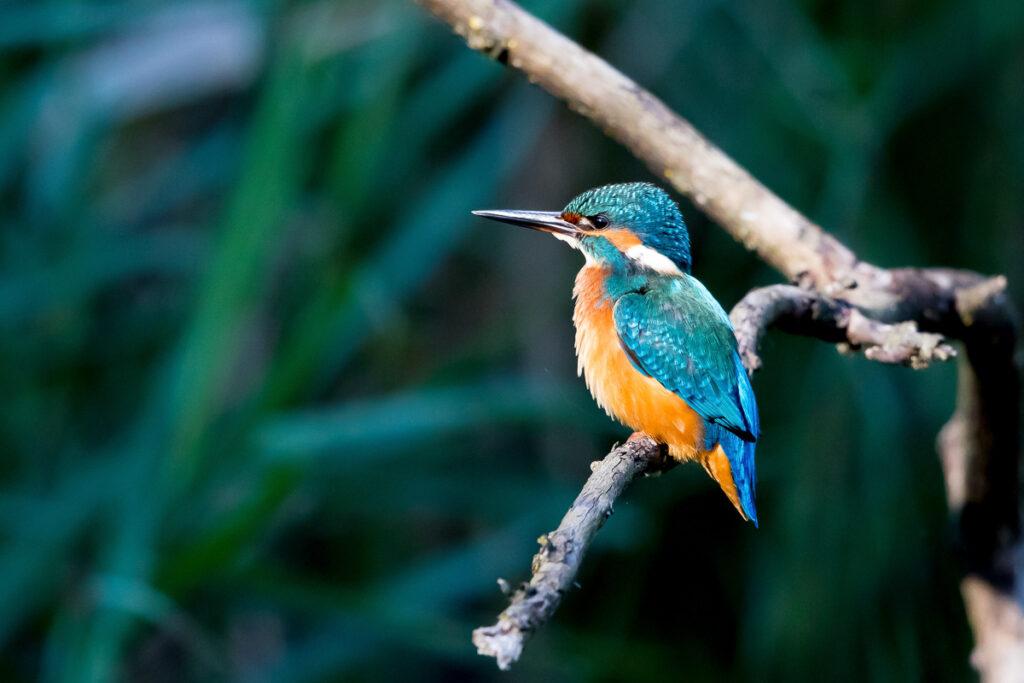 Fotoworkshop – Einführung in die Vogelfotografie – 26. März 2021