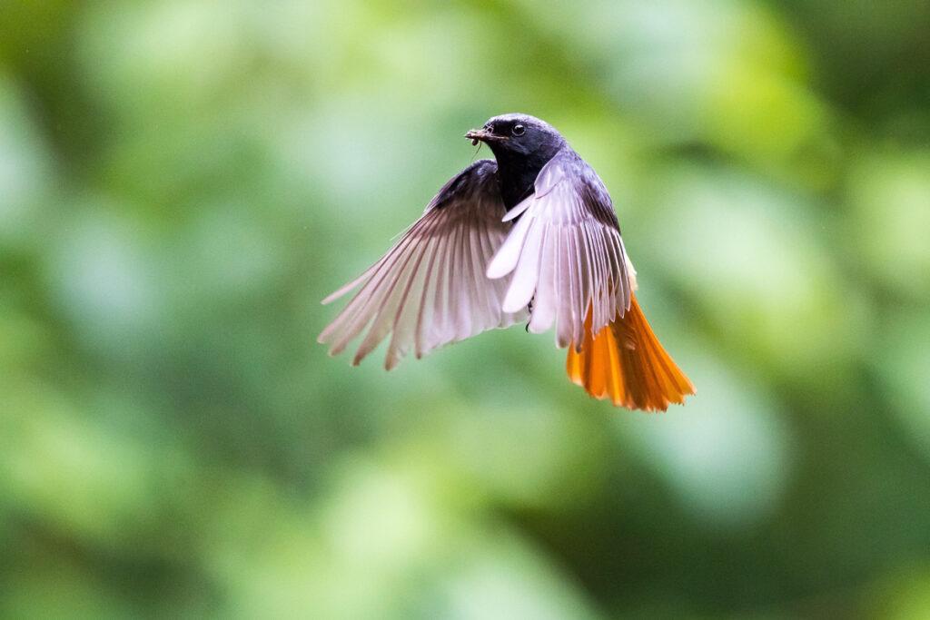 Fotoworkshop – Einführung in die Vogelfotografie – 6. Mai 2022