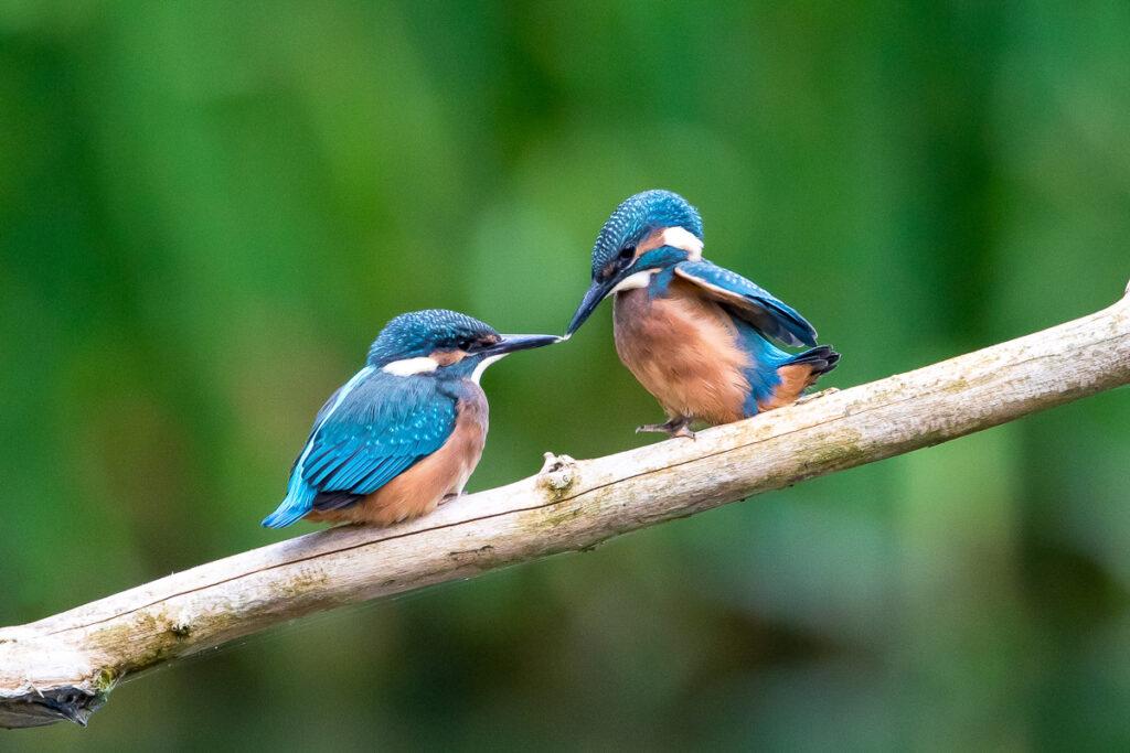 Fotoworkshop – Einführung in die Vogelfotografie – 30. April 2021