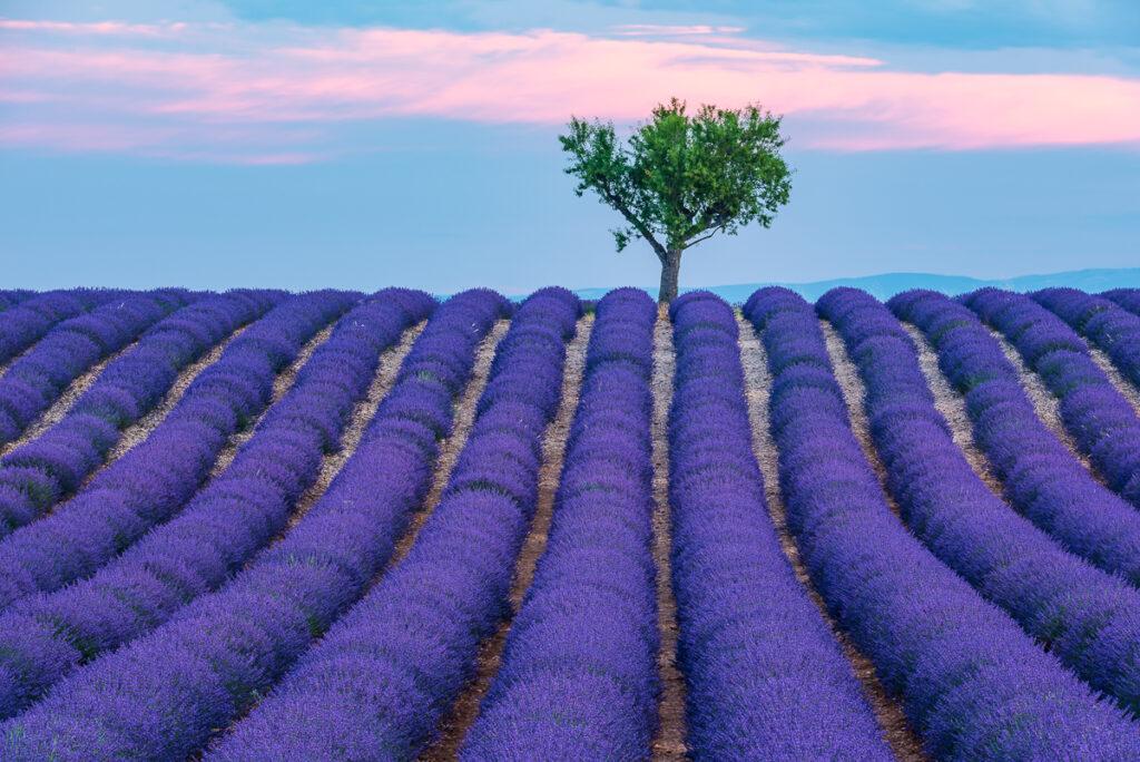 Fotoreise Provence 2. – 9. Juli 2022